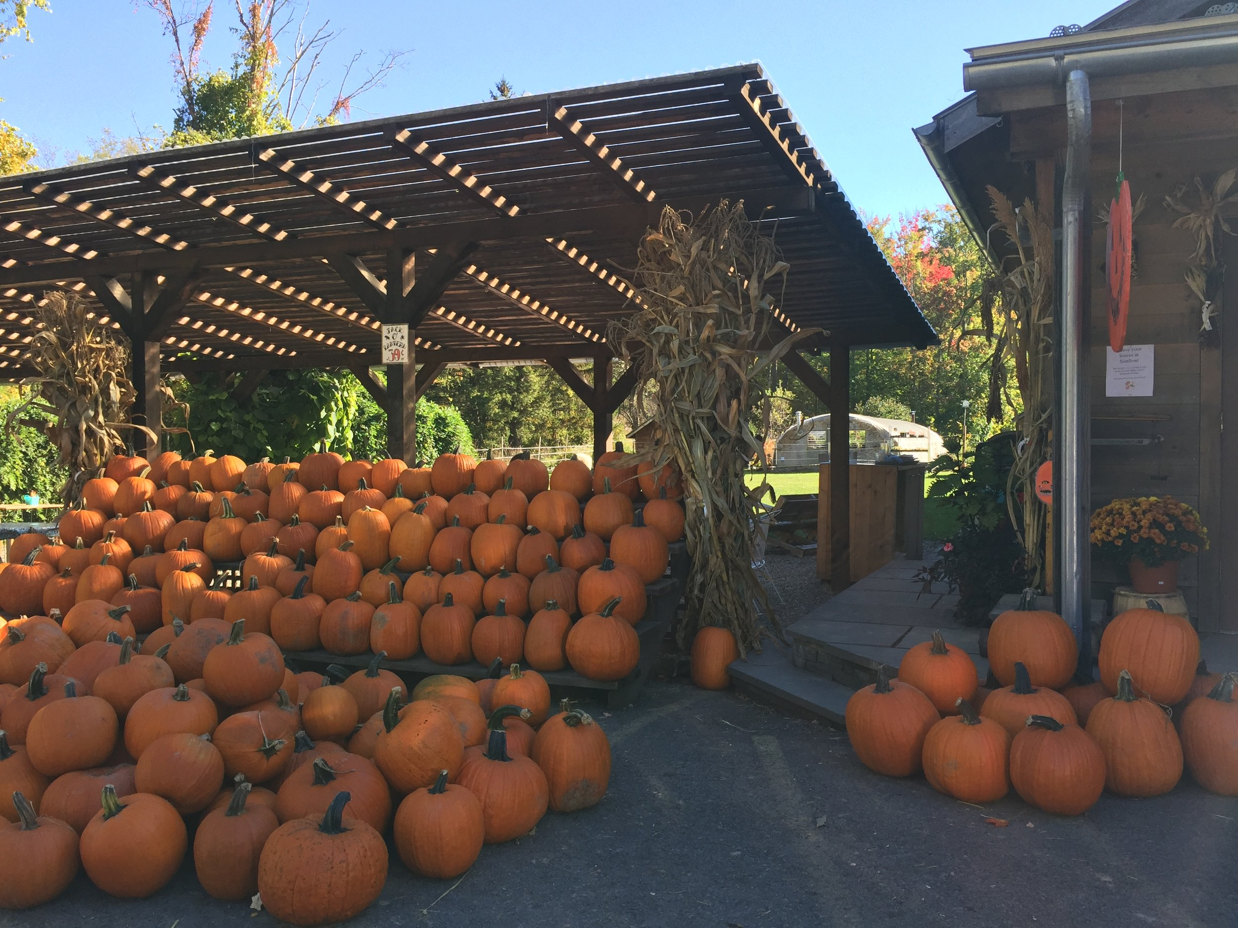Behind the pumpkins is a seating area for lunch. Great green space for the kids to run around in.