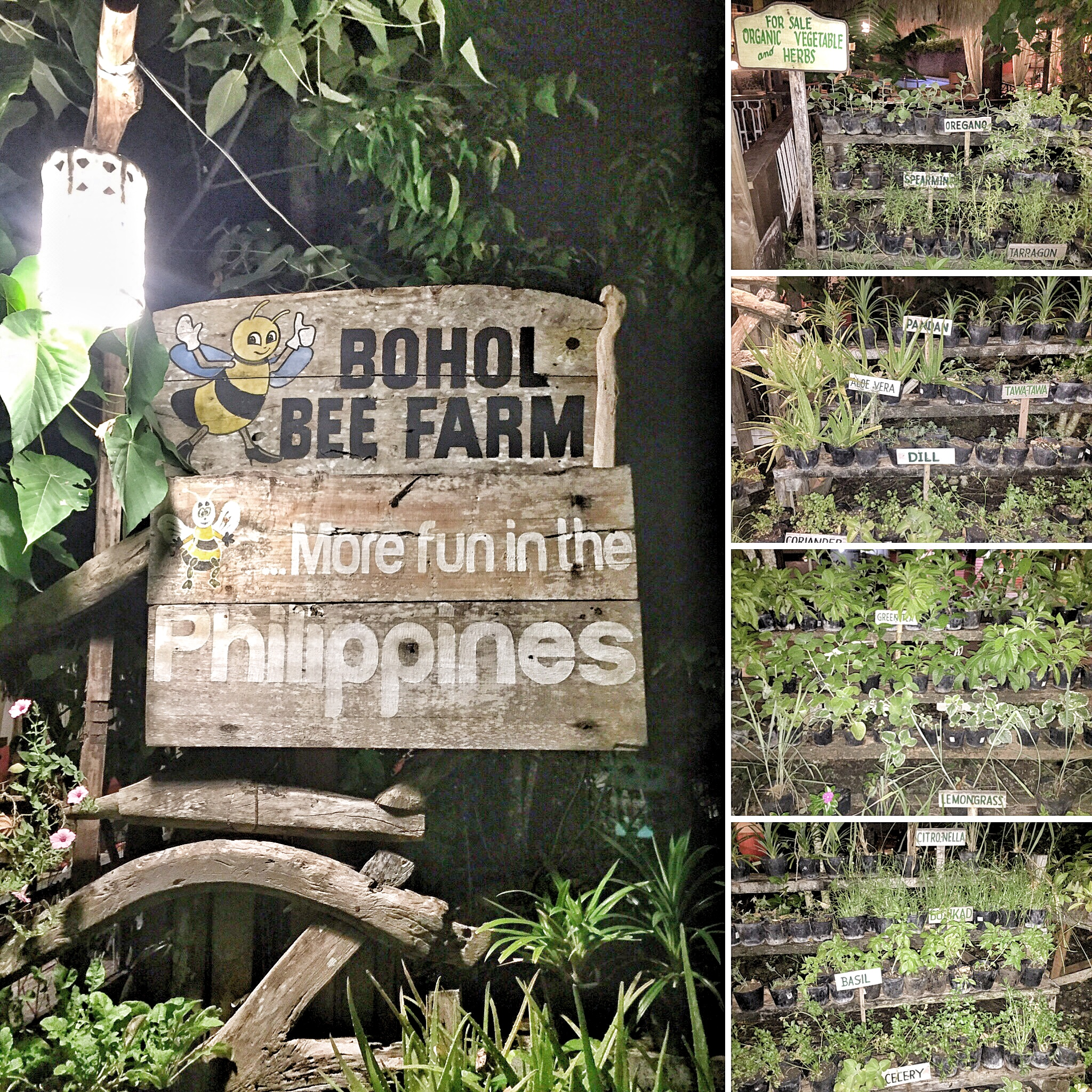 The Bohol Bee Farm serving organic fare and selling sustainable products.