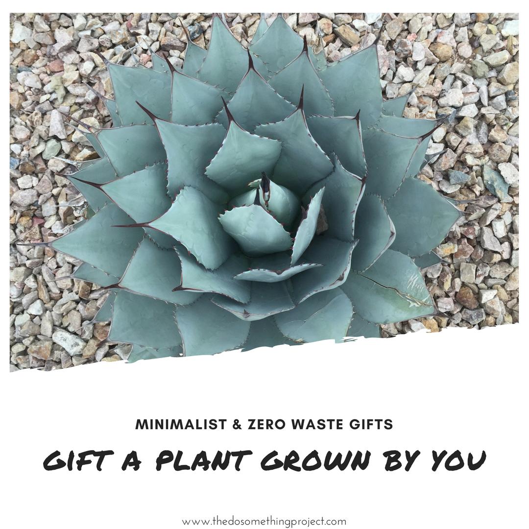 minimalist-zero-waste-gift-ideas-plants
