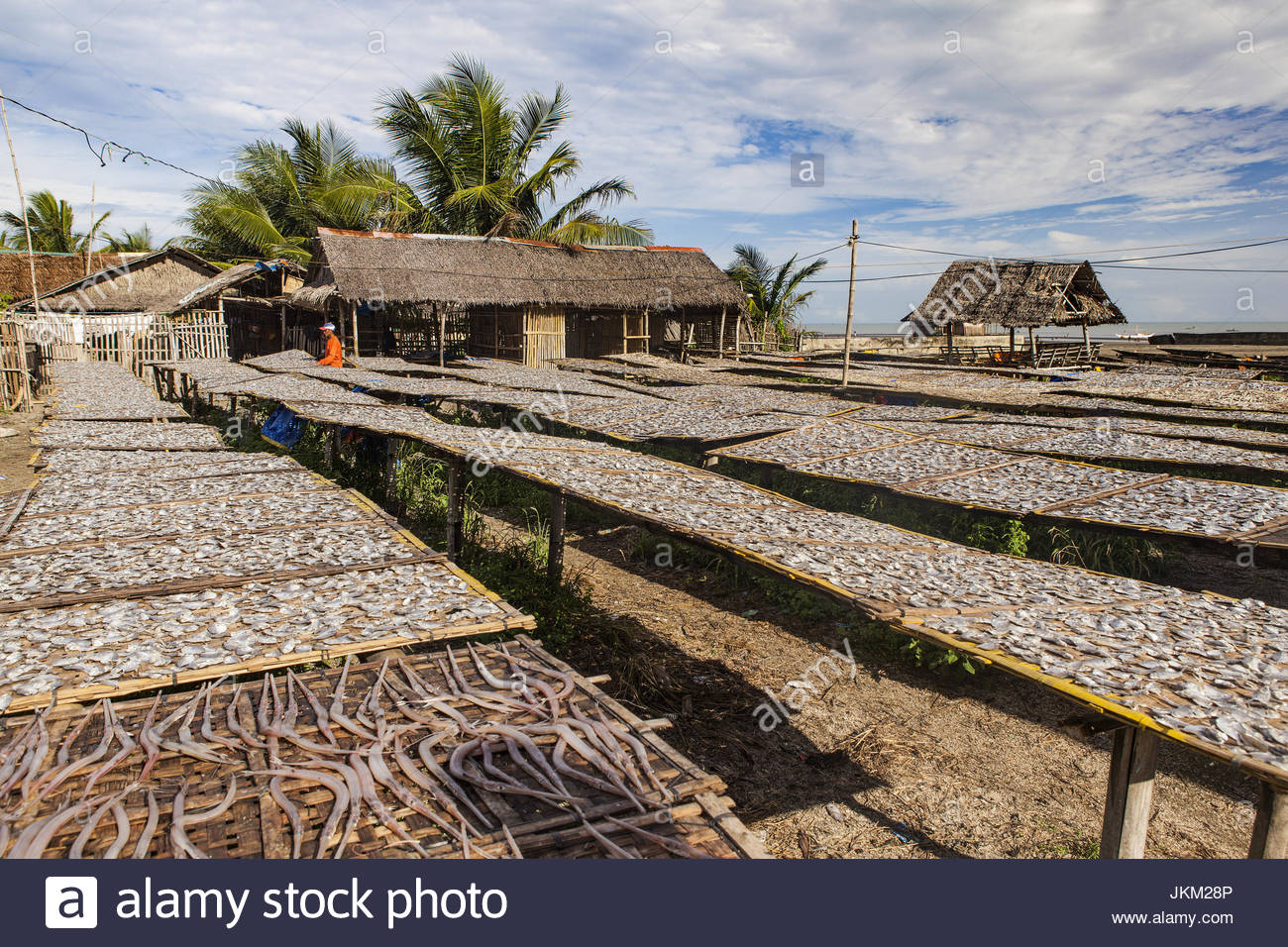 Fish being dried in the sun.