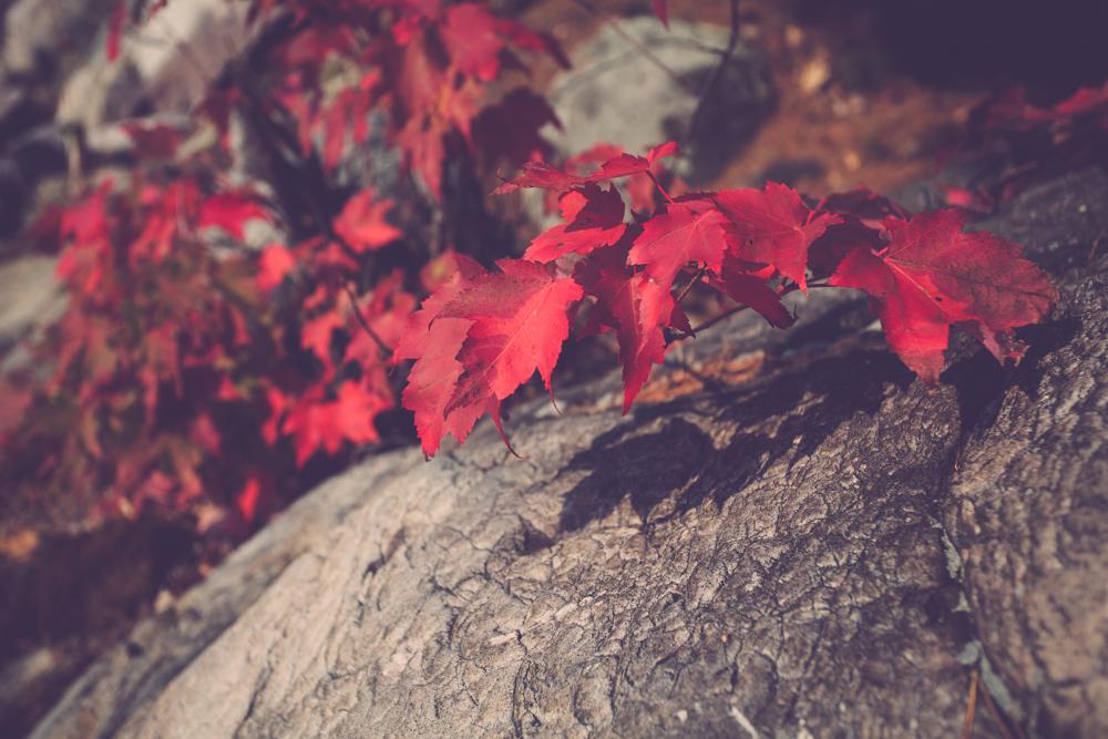 Fall Colours. Killarney Provincial Park, Ontario, Canada.