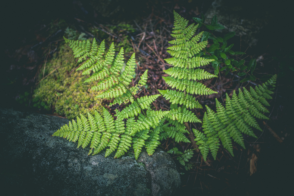 JC-Green-Love-Flora-2019-IMG-1180.jpg