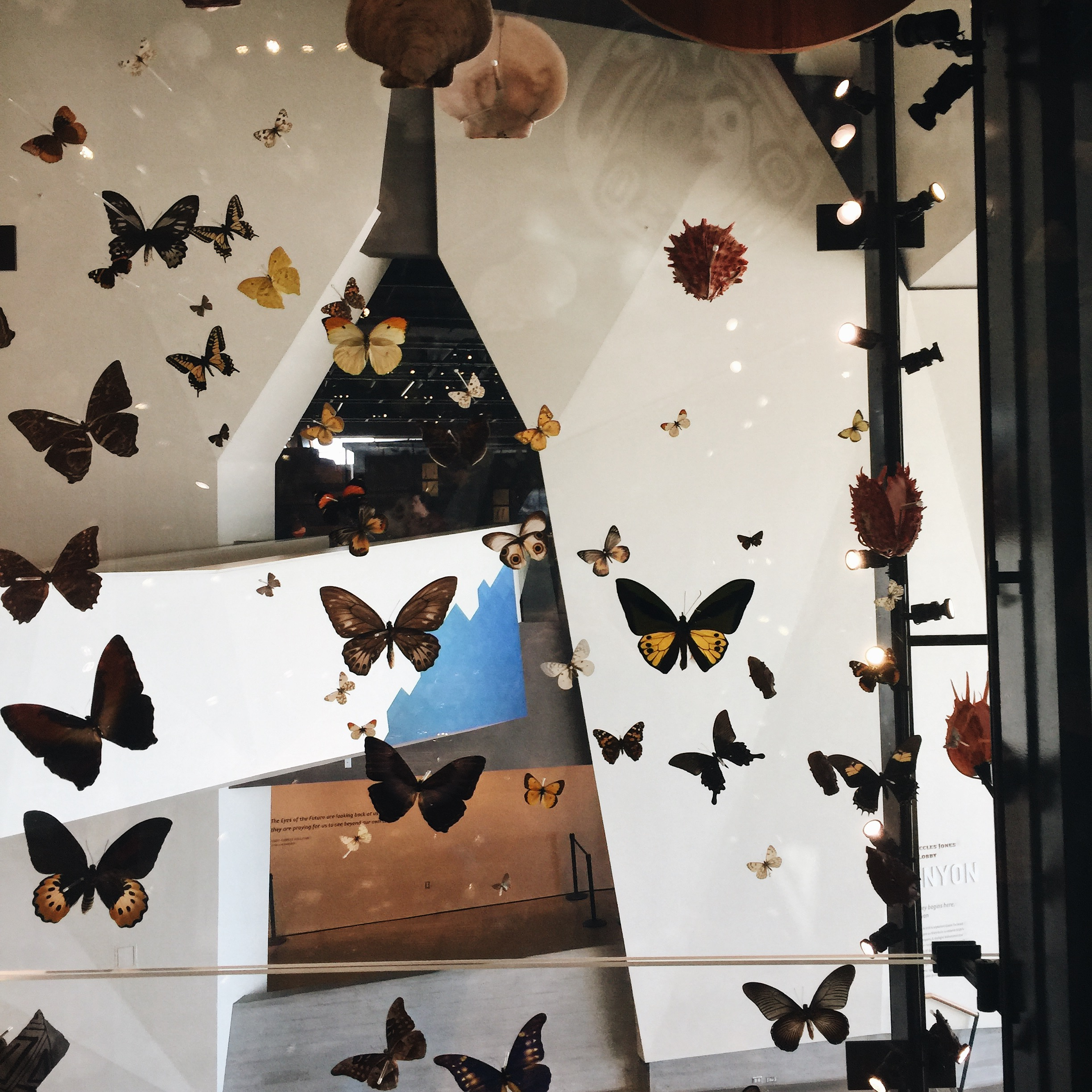 I love that we live in a world with butterflies!