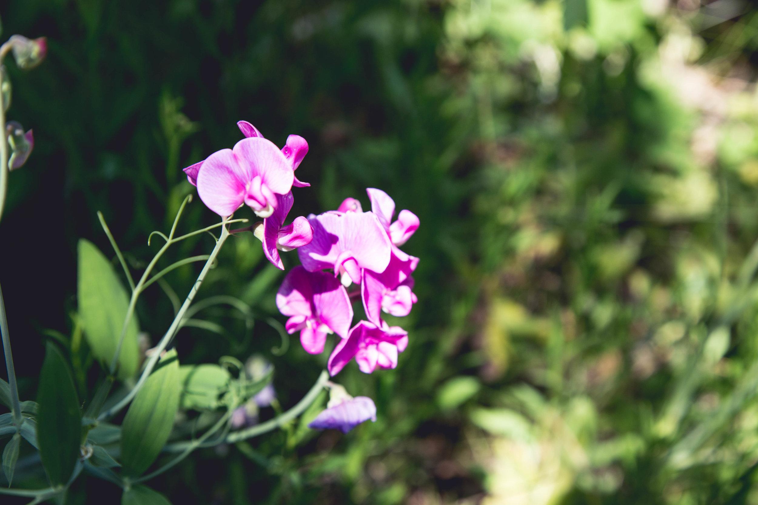 wildflower closeup-1.jpg