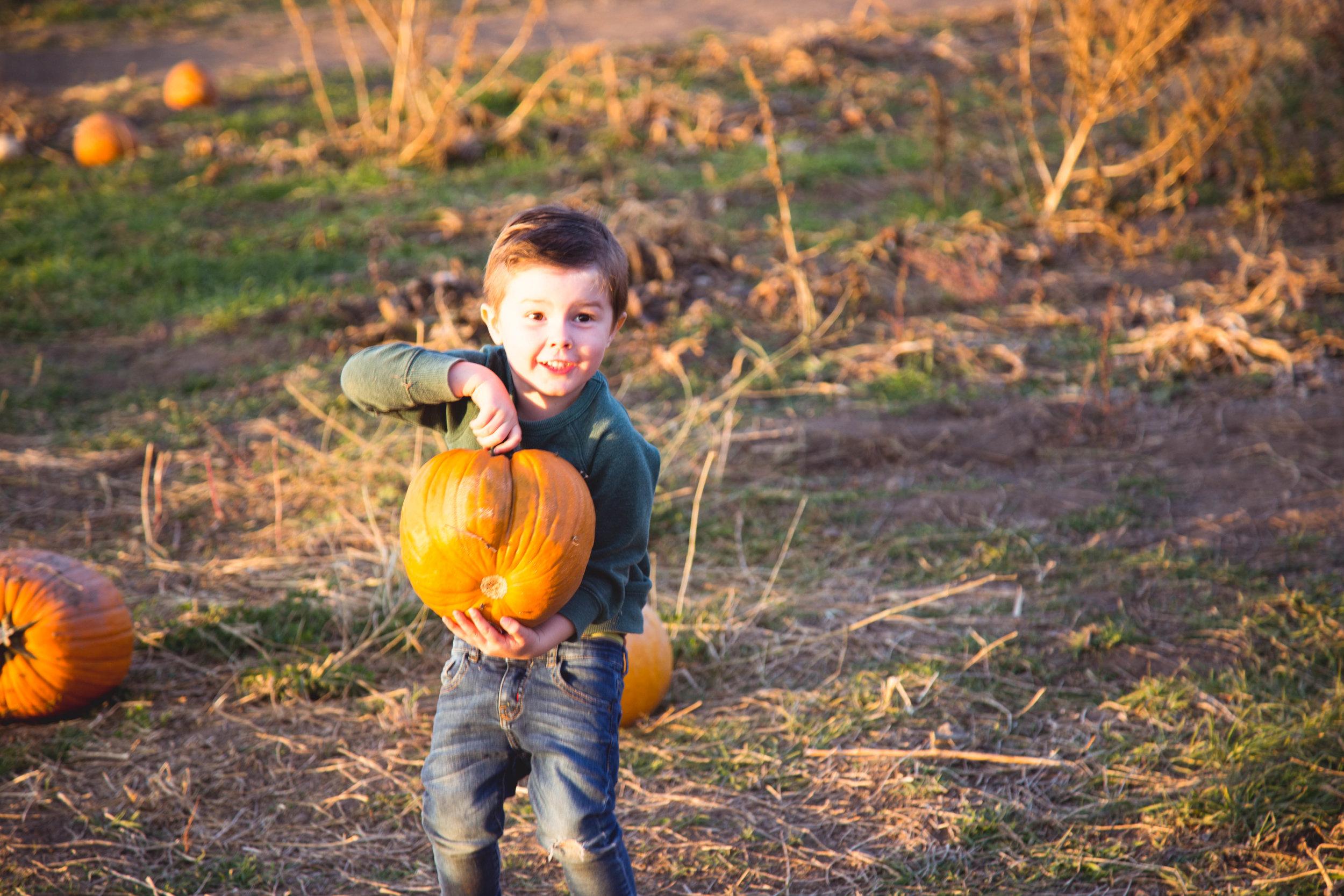 abe pumpkin patch-1.jpg