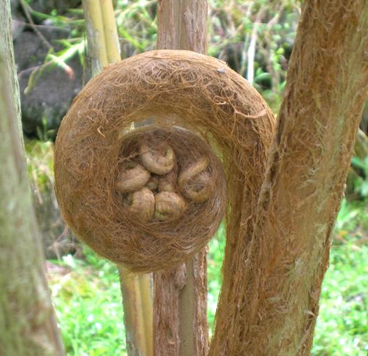Hi-06-Oct-7-Smiths-Farm-372-fern-tree_961.jpg