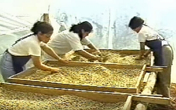 Three of 37 women who formed the all-female ASOMOBI cooperative in Costa Rica. Image from YouTube video.
