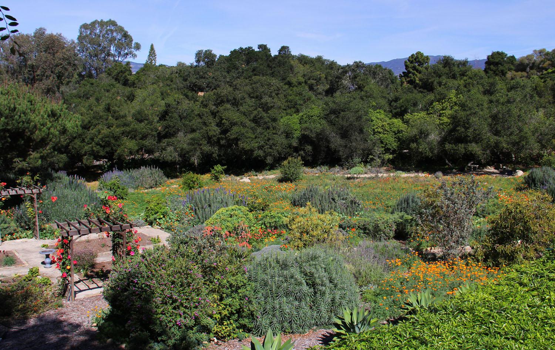Cuervo_garden_feature1.jpg