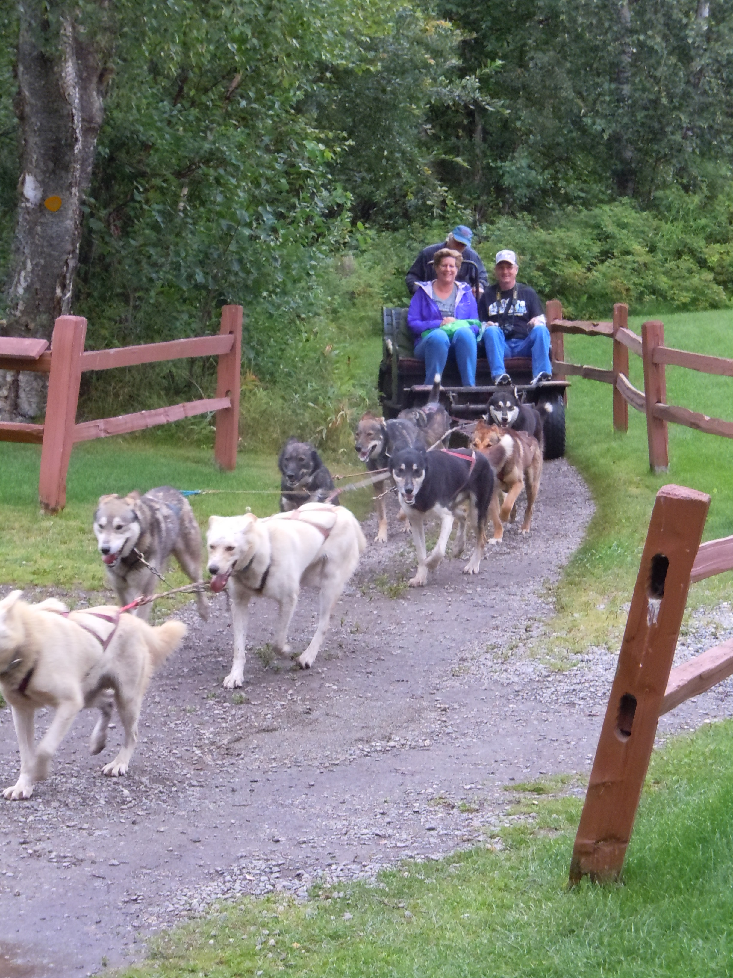 Ride with an Iditarod team and musher
