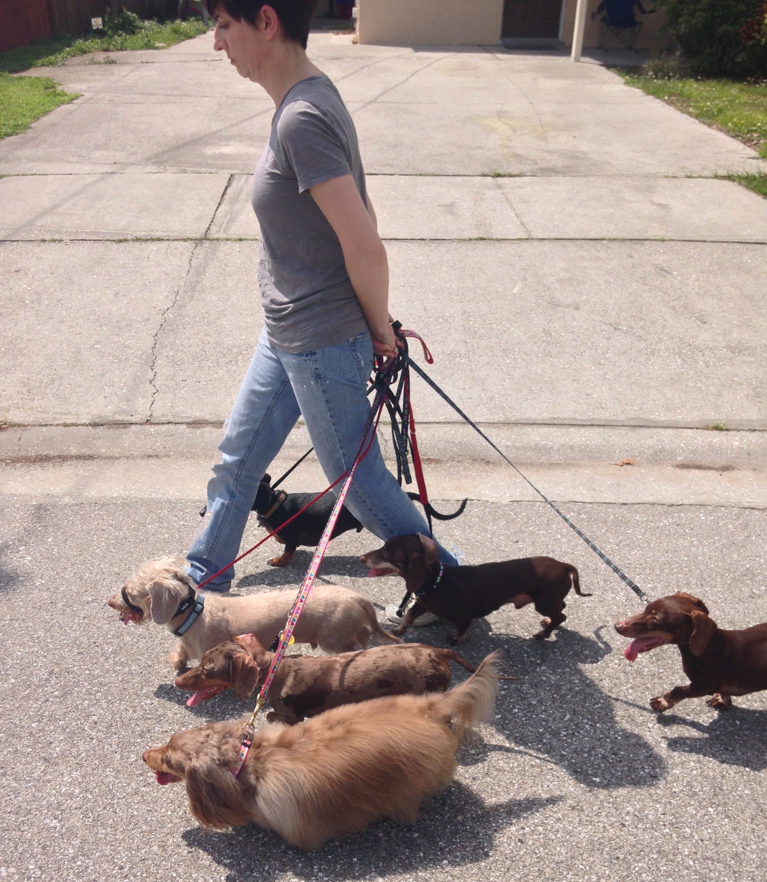 Mastering the walk is one of the most important parts of having a happy, well behaved dog.