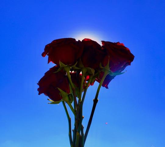 rosebouquet.jpeg