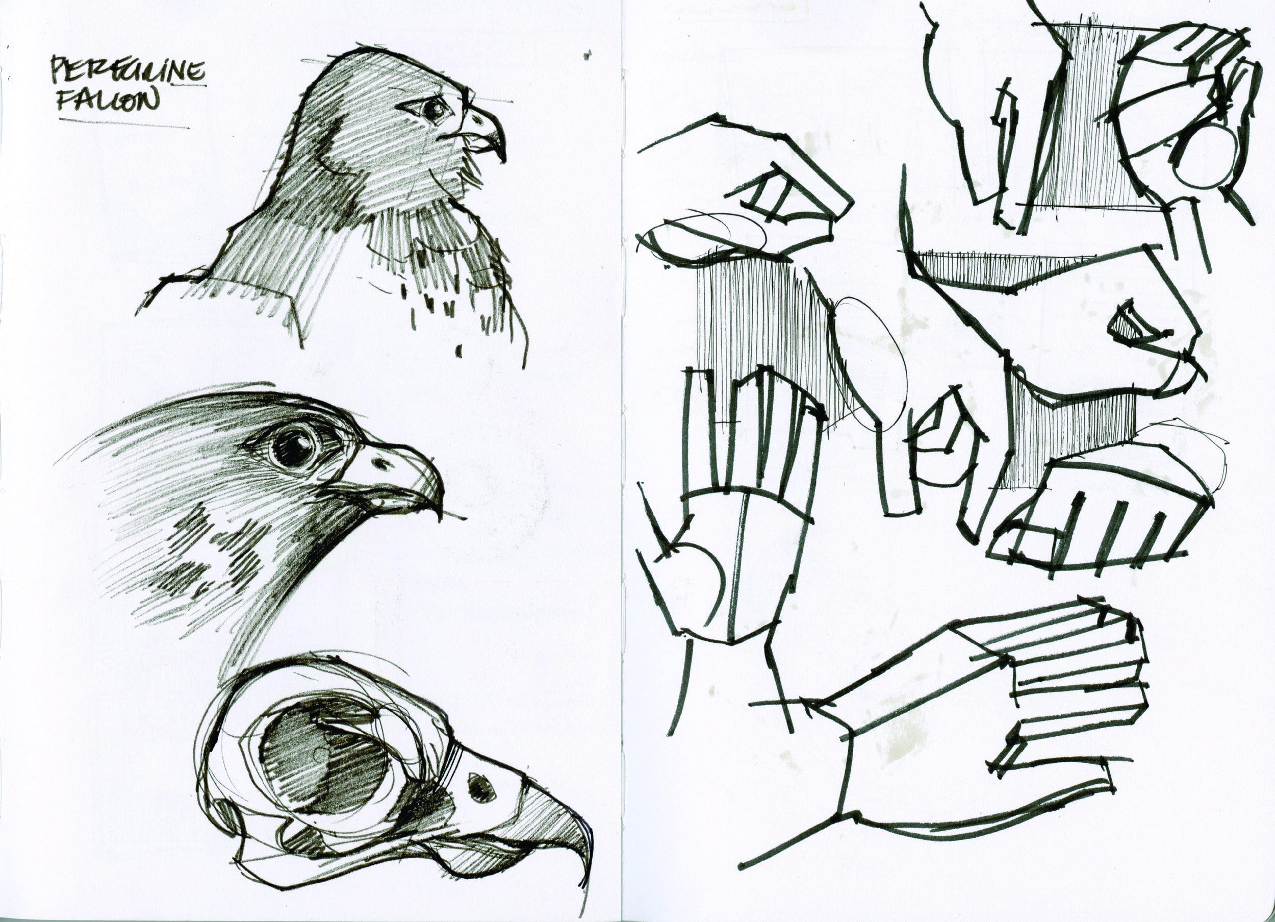 handstudy_falcon composite.jpg