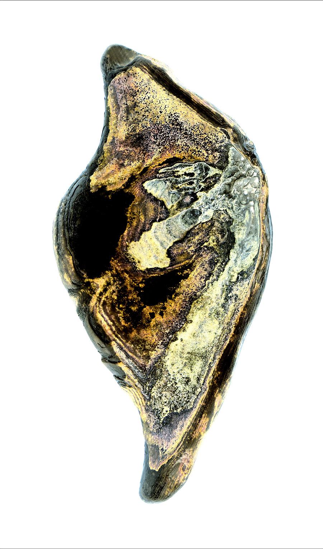 shell034-1.jpg
