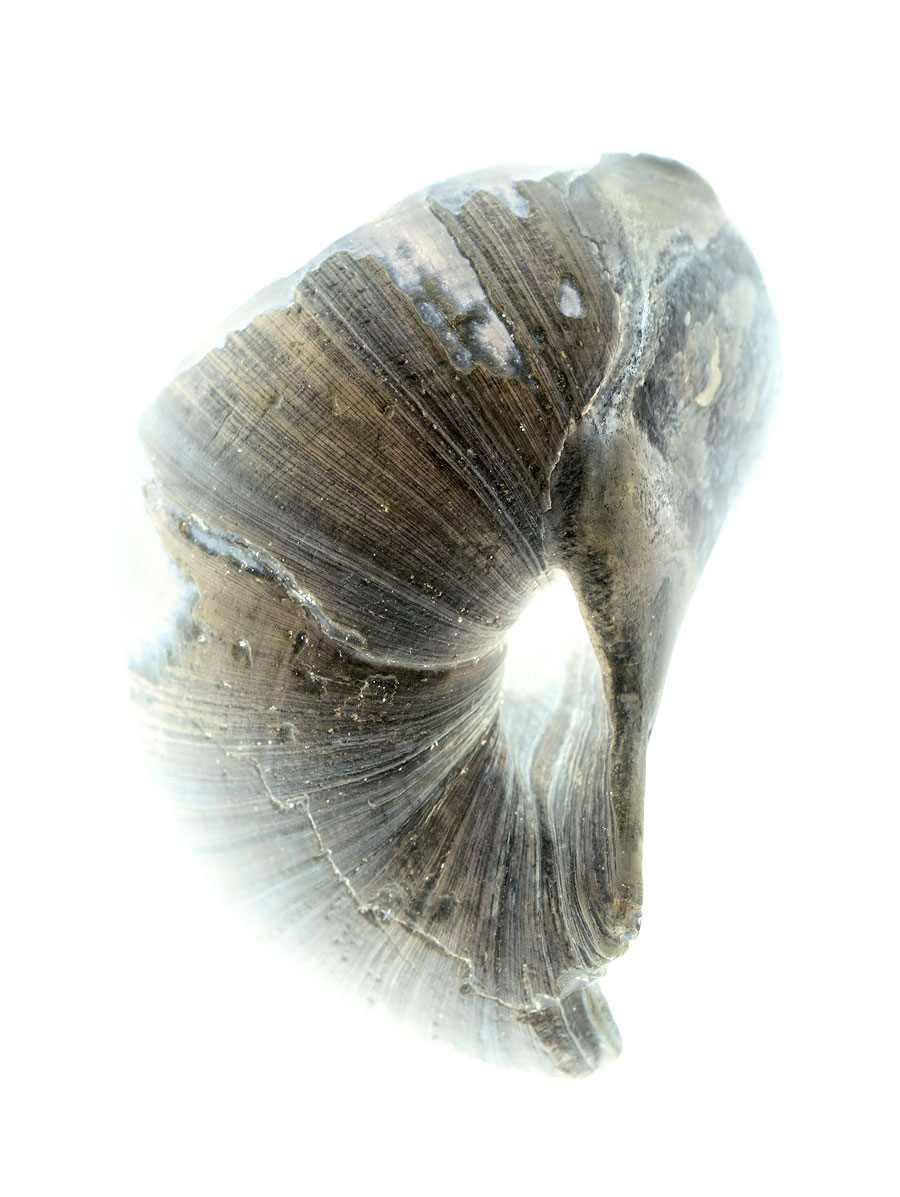 shells058-i.jpg