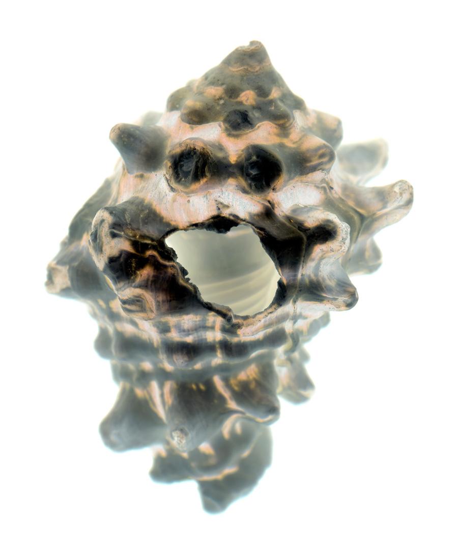 shells-68-i.jpg