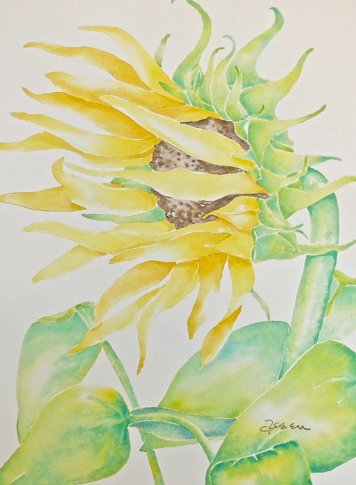Who Has Seen the Wind Sunflower
