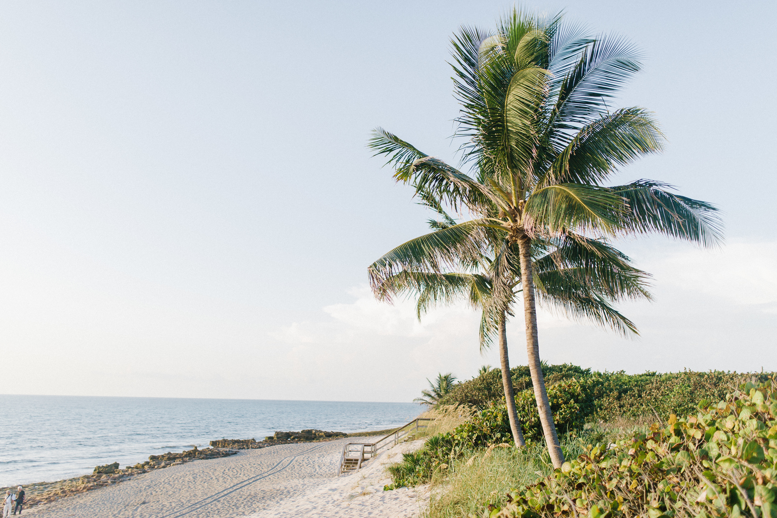 palm trees, coral cove