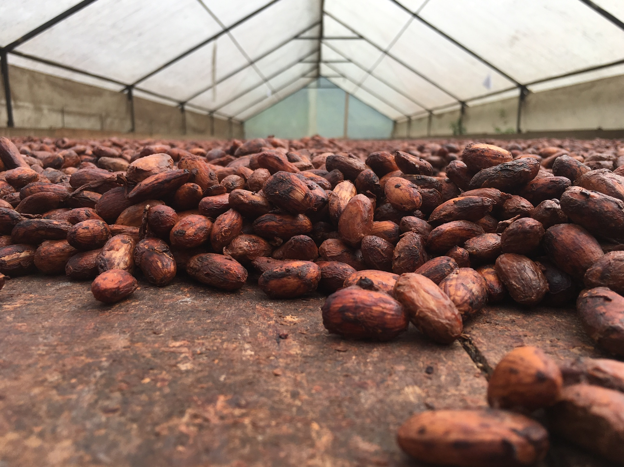 Social Entrepreneurship with Indigenous Cacao Farmer Associations -