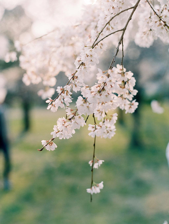 StephanieGanPhotoJapan-57.jpg
