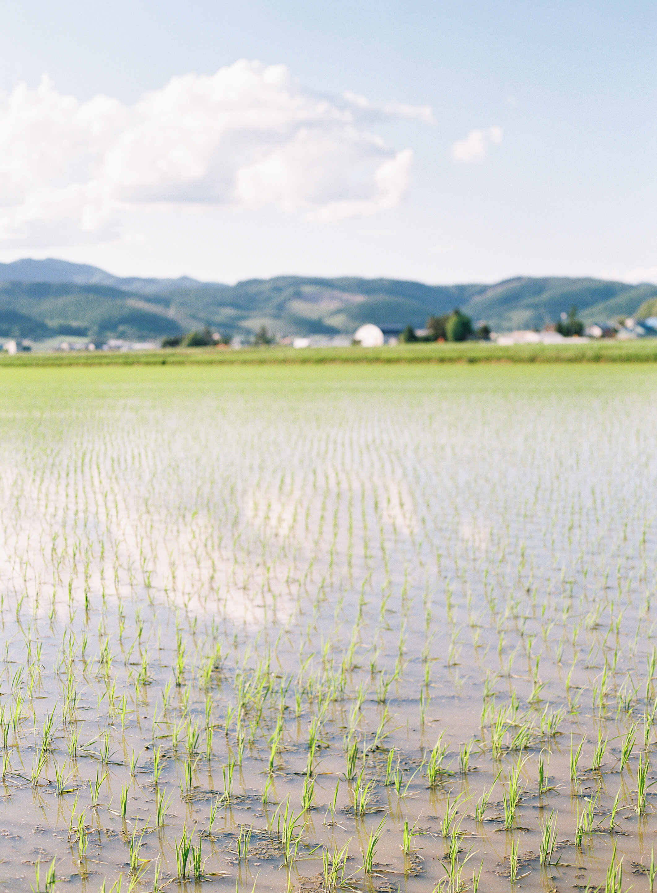 StephanieGanPhoto_Hokkaido-037.jpg