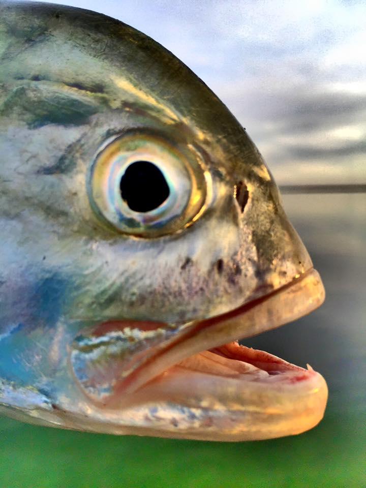 fish eye.jpg