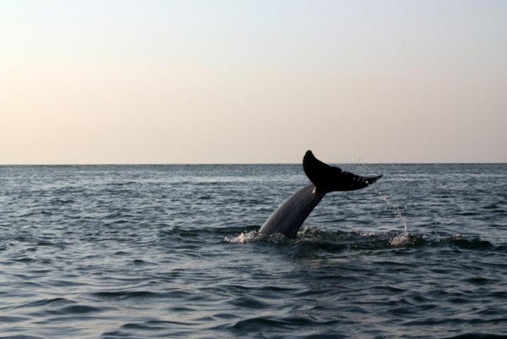 dolphin tale.jpg