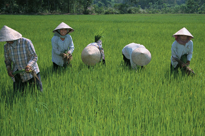 vietnam_workers in the field_1500px.jpg