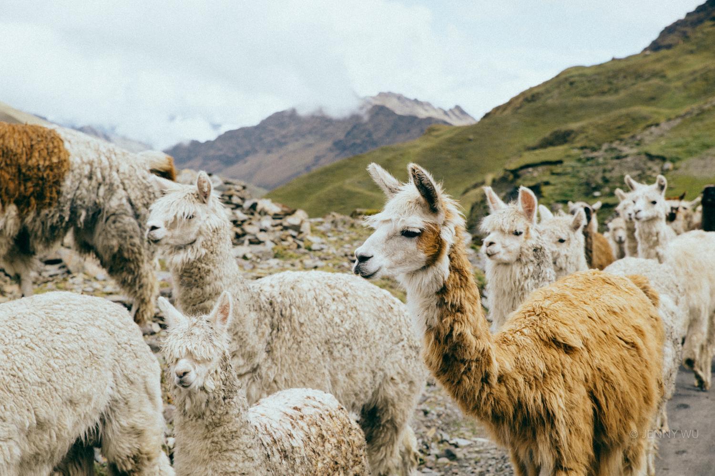 Peru polaroid project-12.jpg