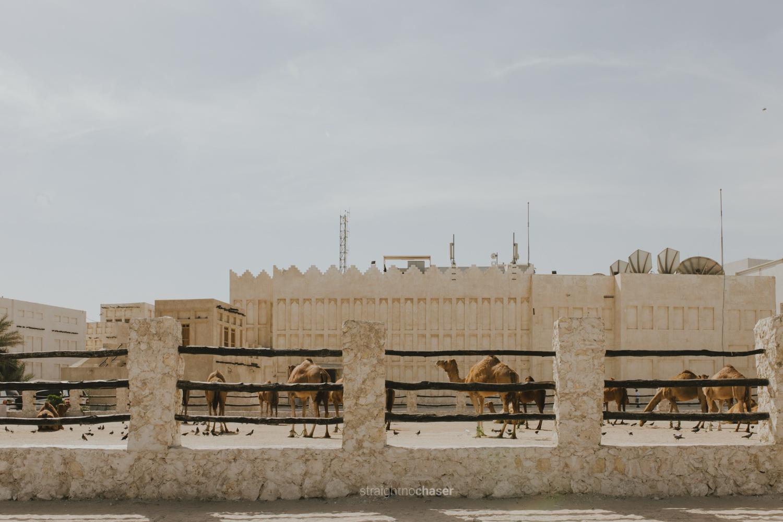 Camels in Souq Waqif Doha, Qatar: Honeymoon Travel Photos