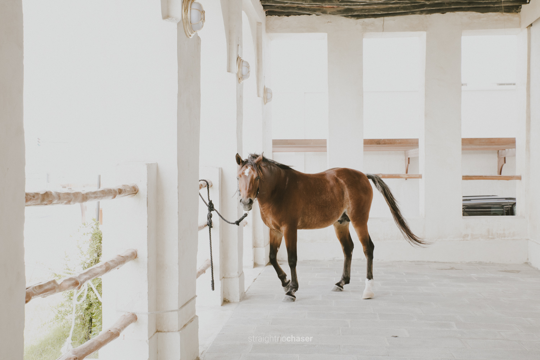 Arabian horses in Souq Waqif Doha, Qatar: Honeymoon Travel Photos