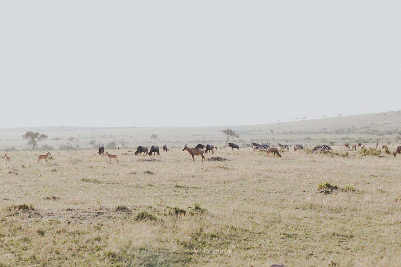 Safari diary part 1: Masai Mara