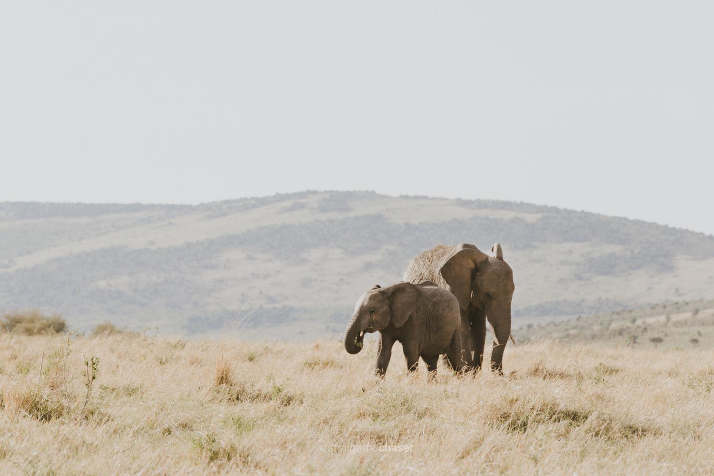 Safari diary part 1: Masai Mara- elephants