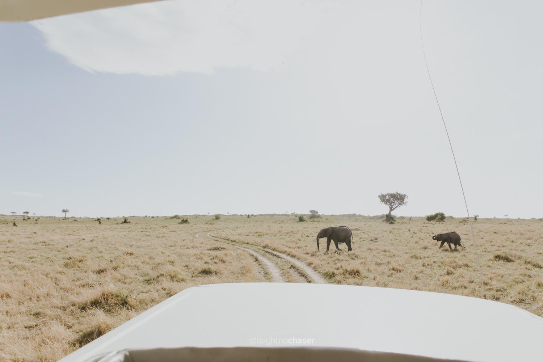 Safari diary part 1: Elephants in the Masai Mara