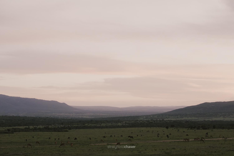 Safari diary part 1:Masai Mara