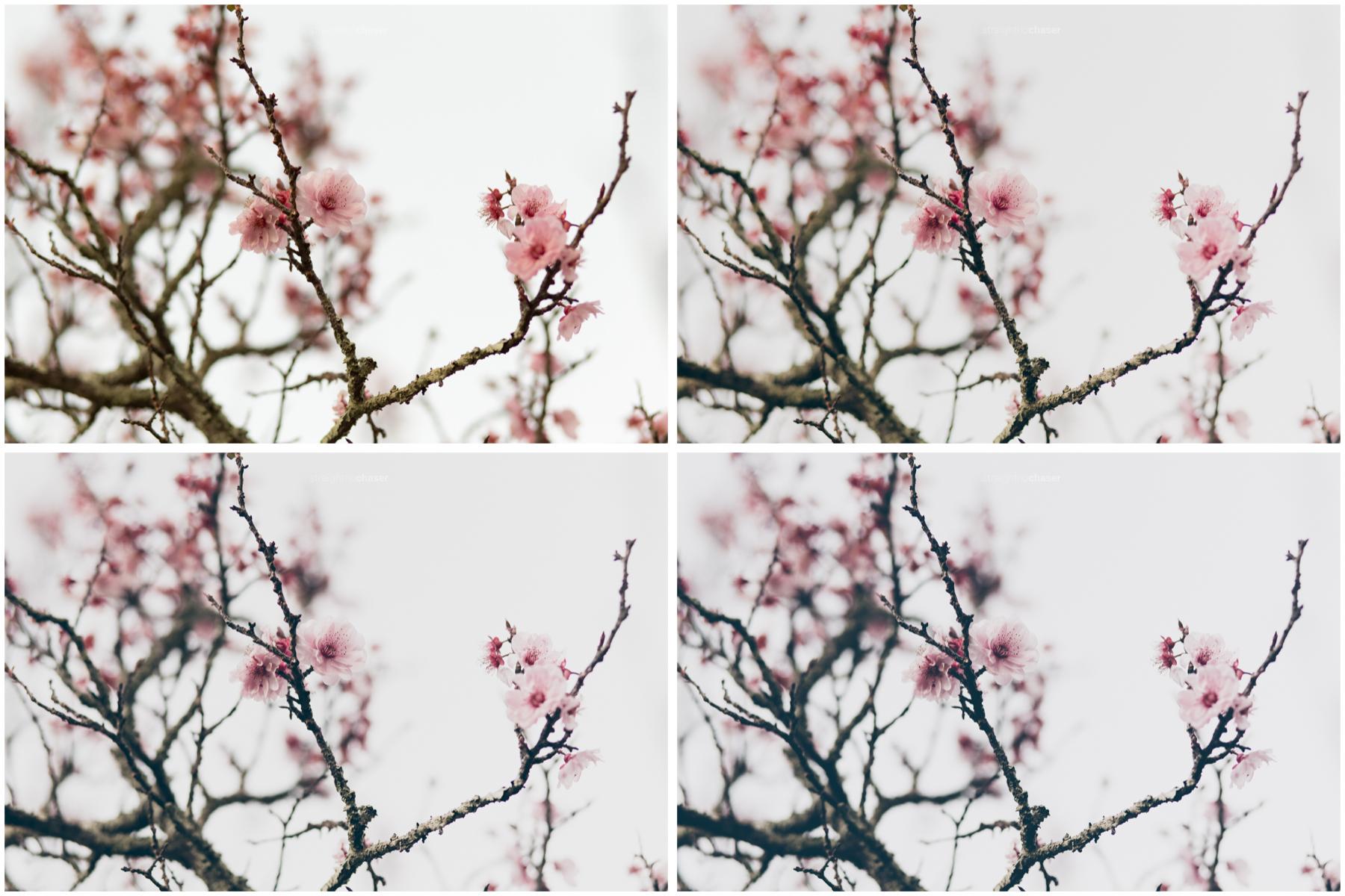 RAW (top left), VM- (top right), VM (bottom left), VM+ (bottom right)