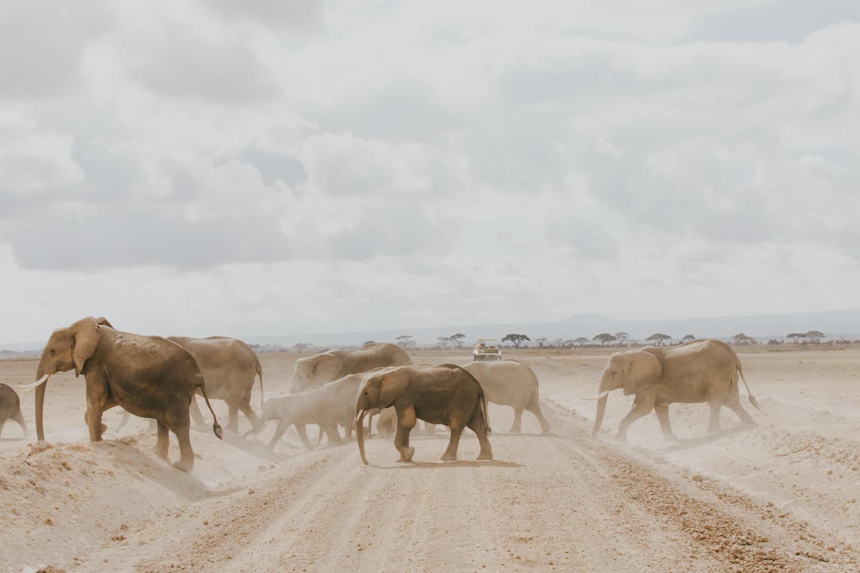 Kenya safari diary: Amboseli National Park