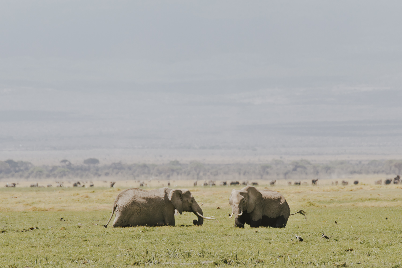 Kenya safari diary: Elephants in Amboseli National Park