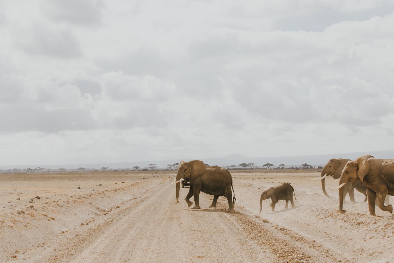 Amboseli elephants- photography by Jenny Wu