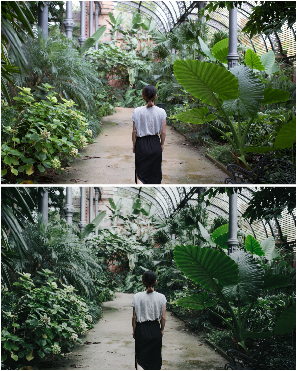 Greenhouse and foliage. Before (top), and with Film Luxe 3 preset applied (bottom)