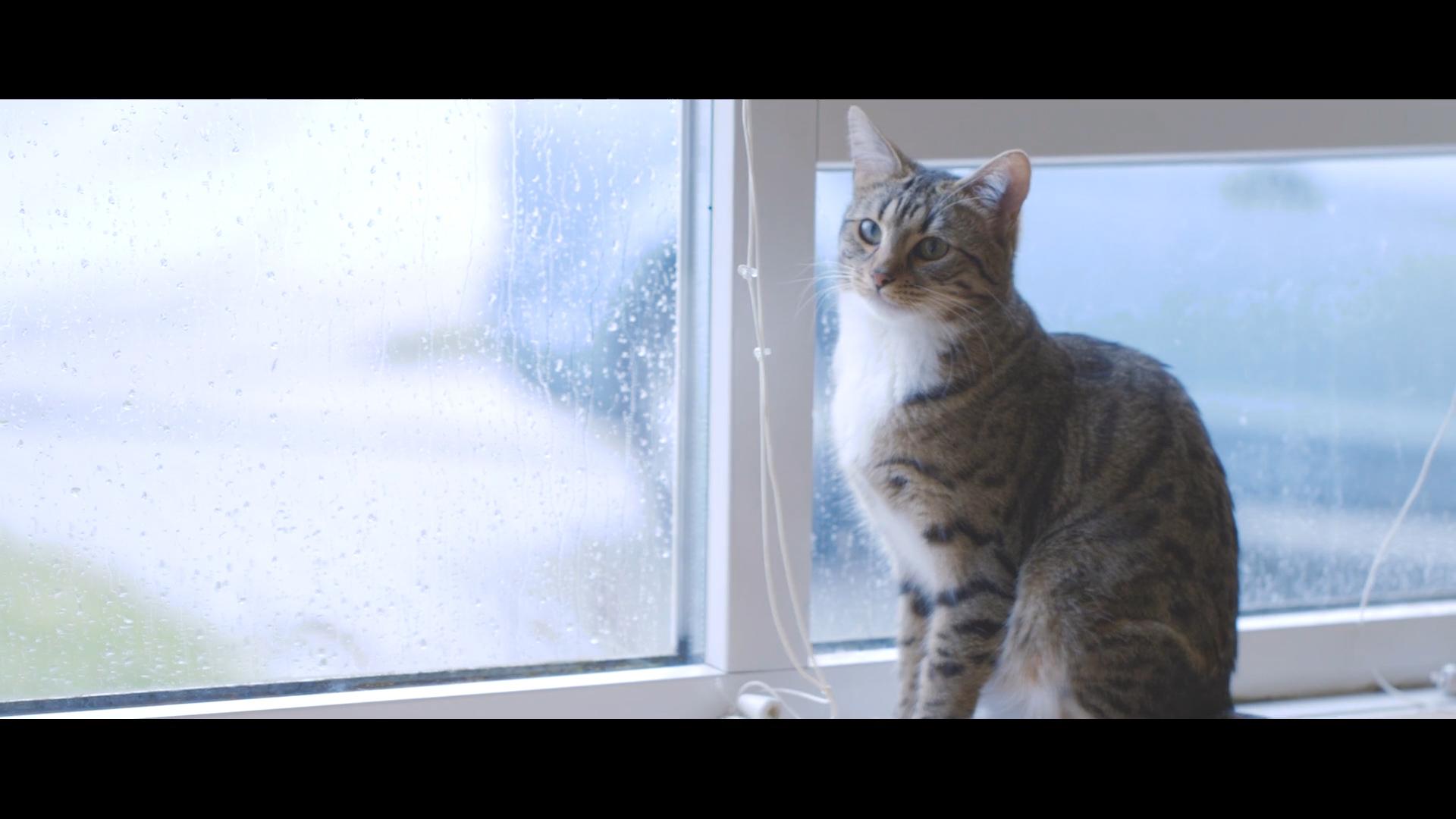 Cat on shelf.jpg