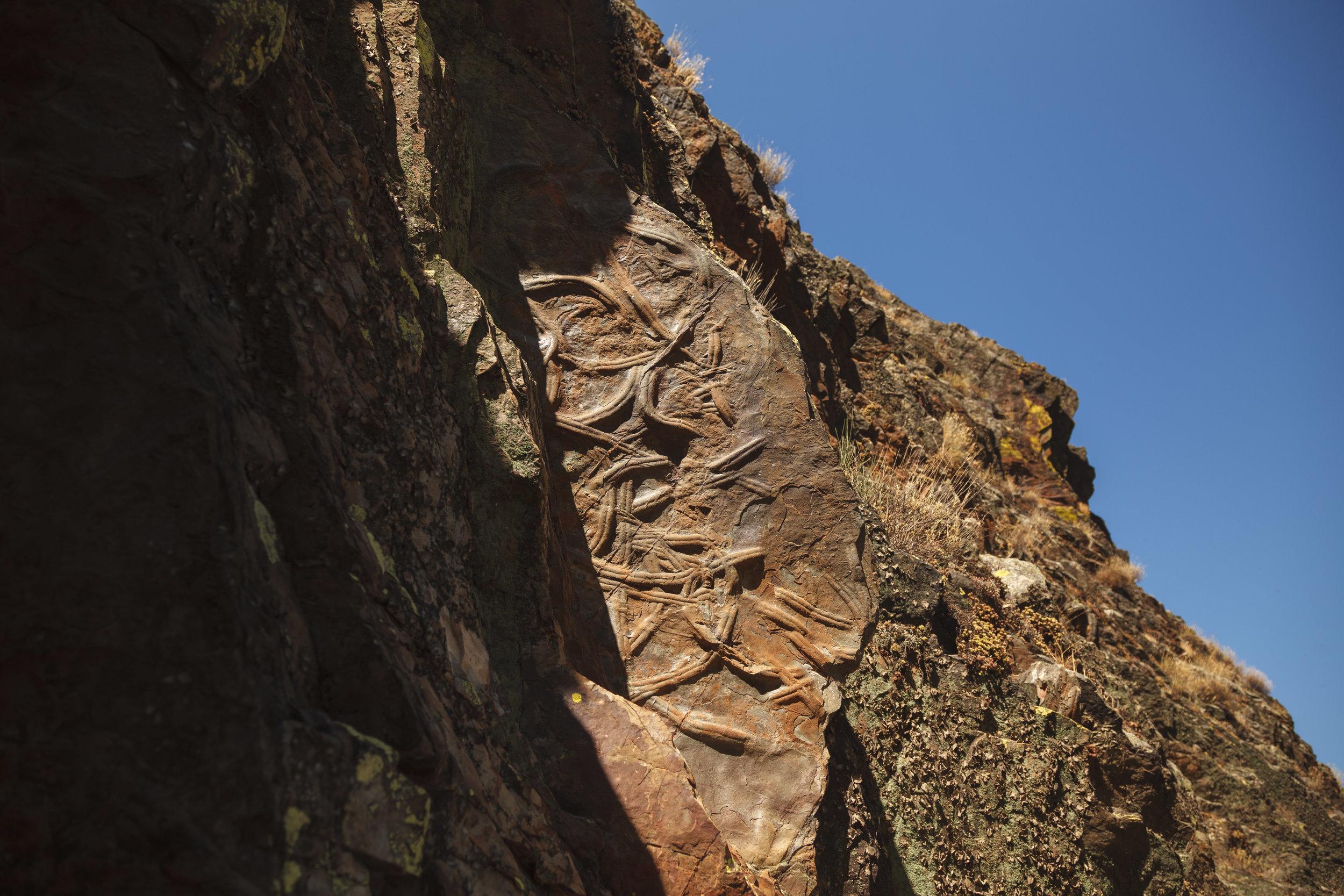 Penha Garcia | Fósseis Cruziana II