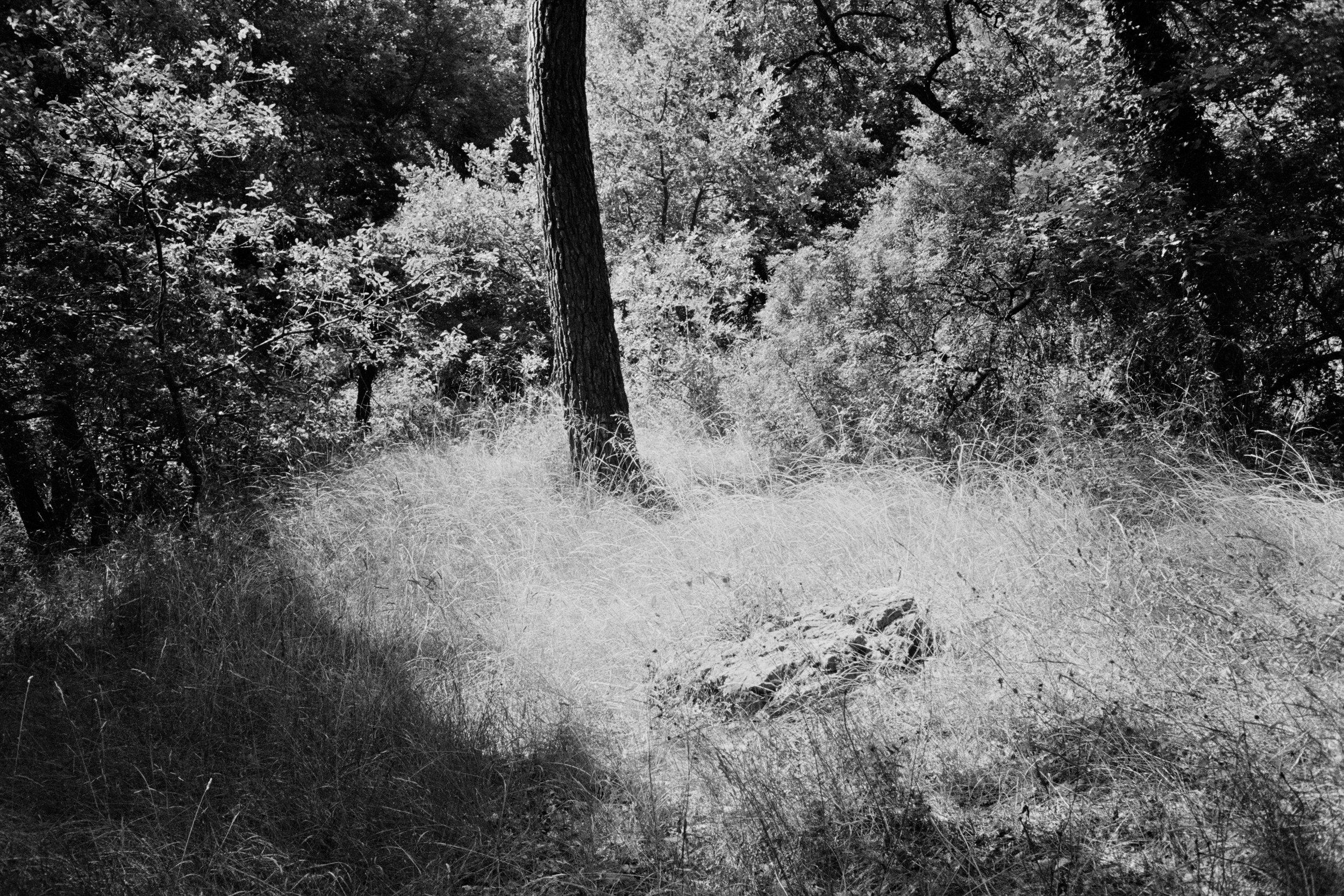 Still Life With Black Tree - 2014