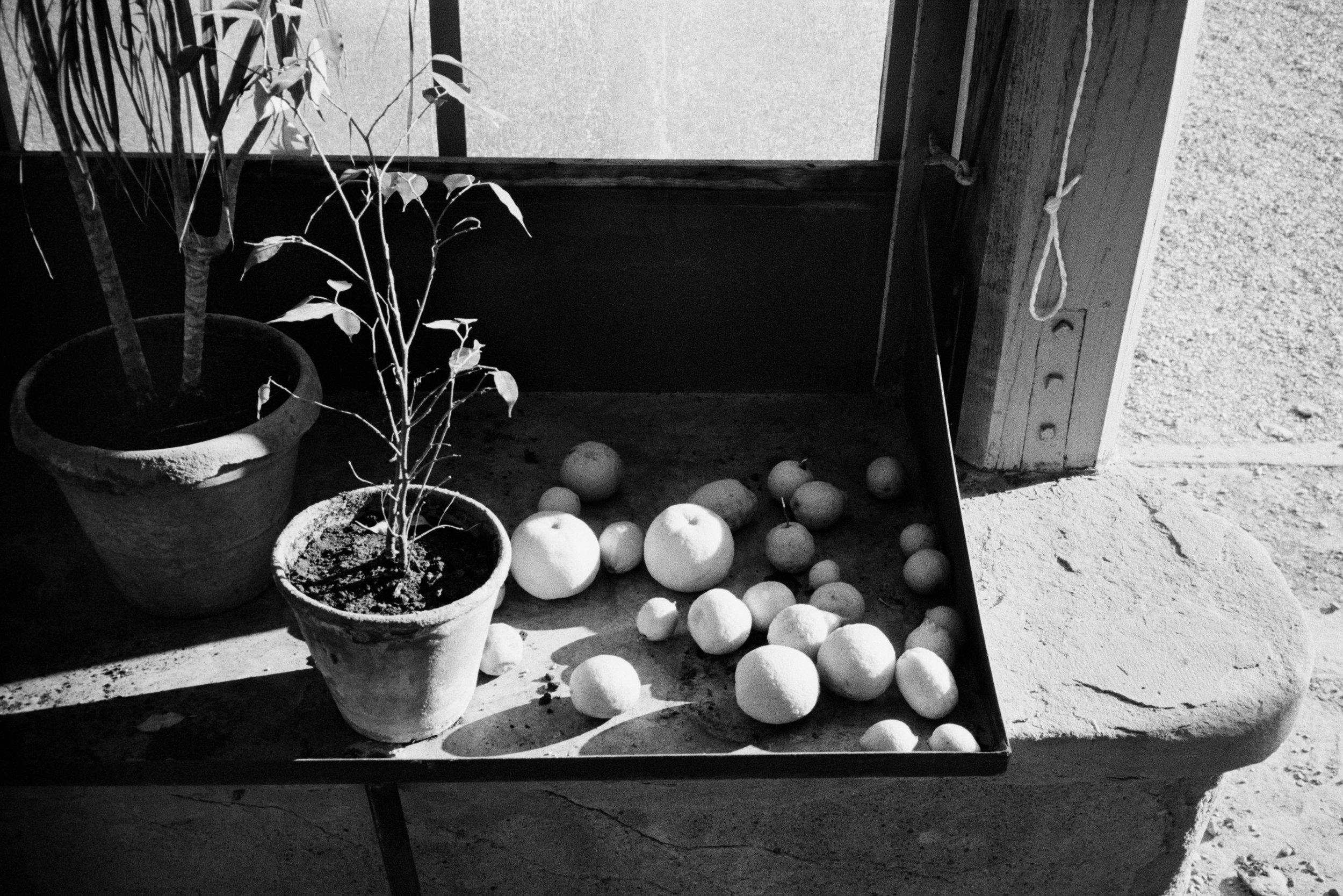 Still Life With Lemons - 2013