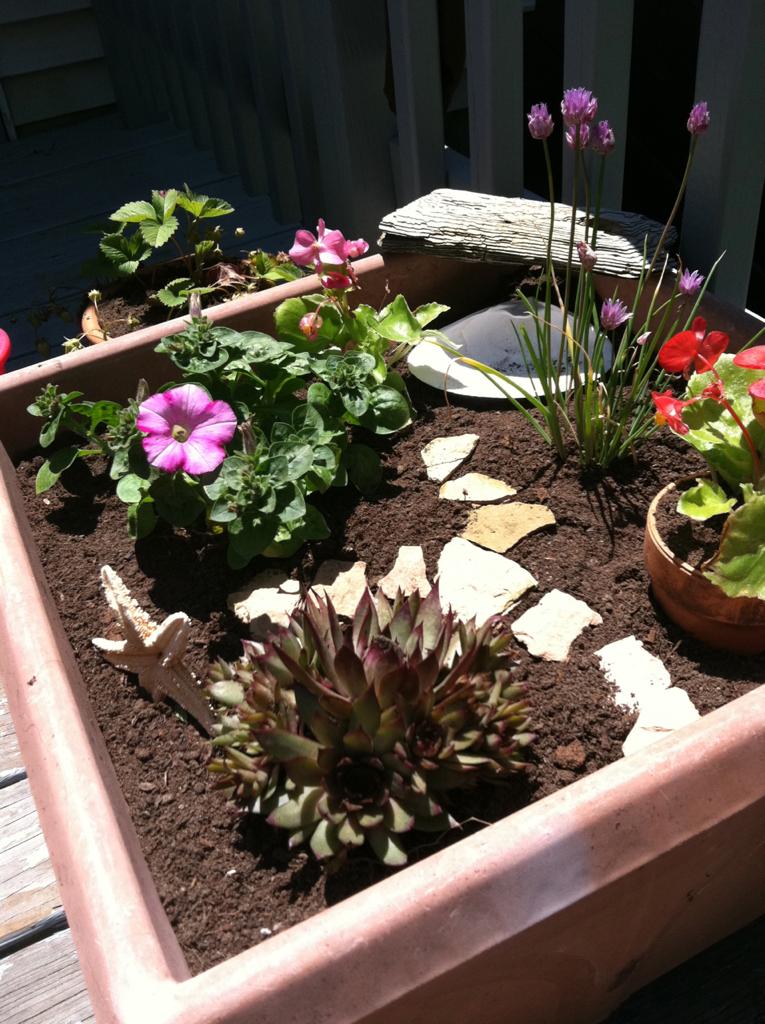 The fairy garden Ladybug and I made.