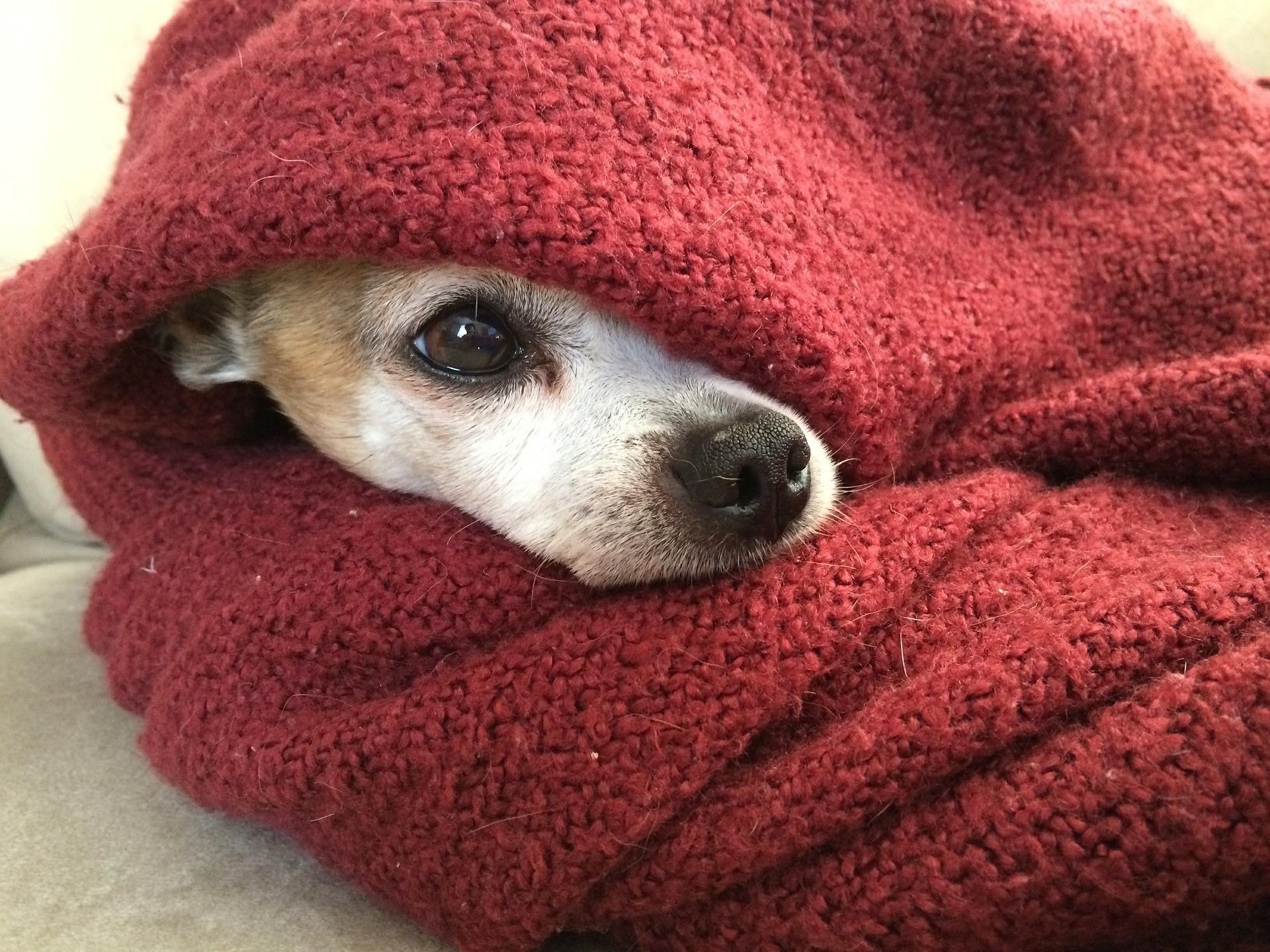 puppy under blanket.jpg