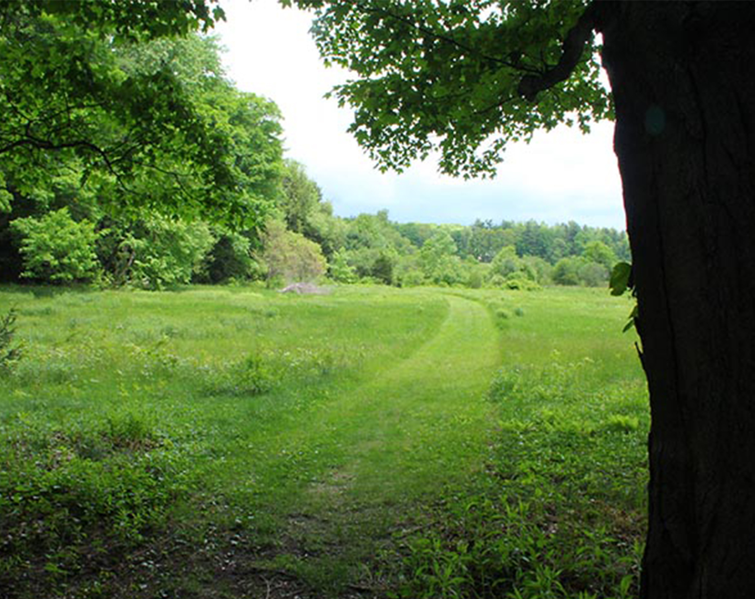 FarandNear Meadow.jpg