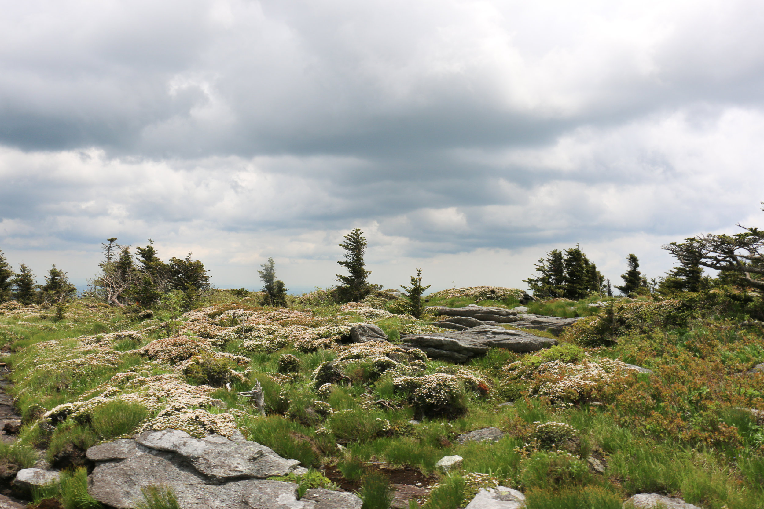 grandfather-mountain-rocks
