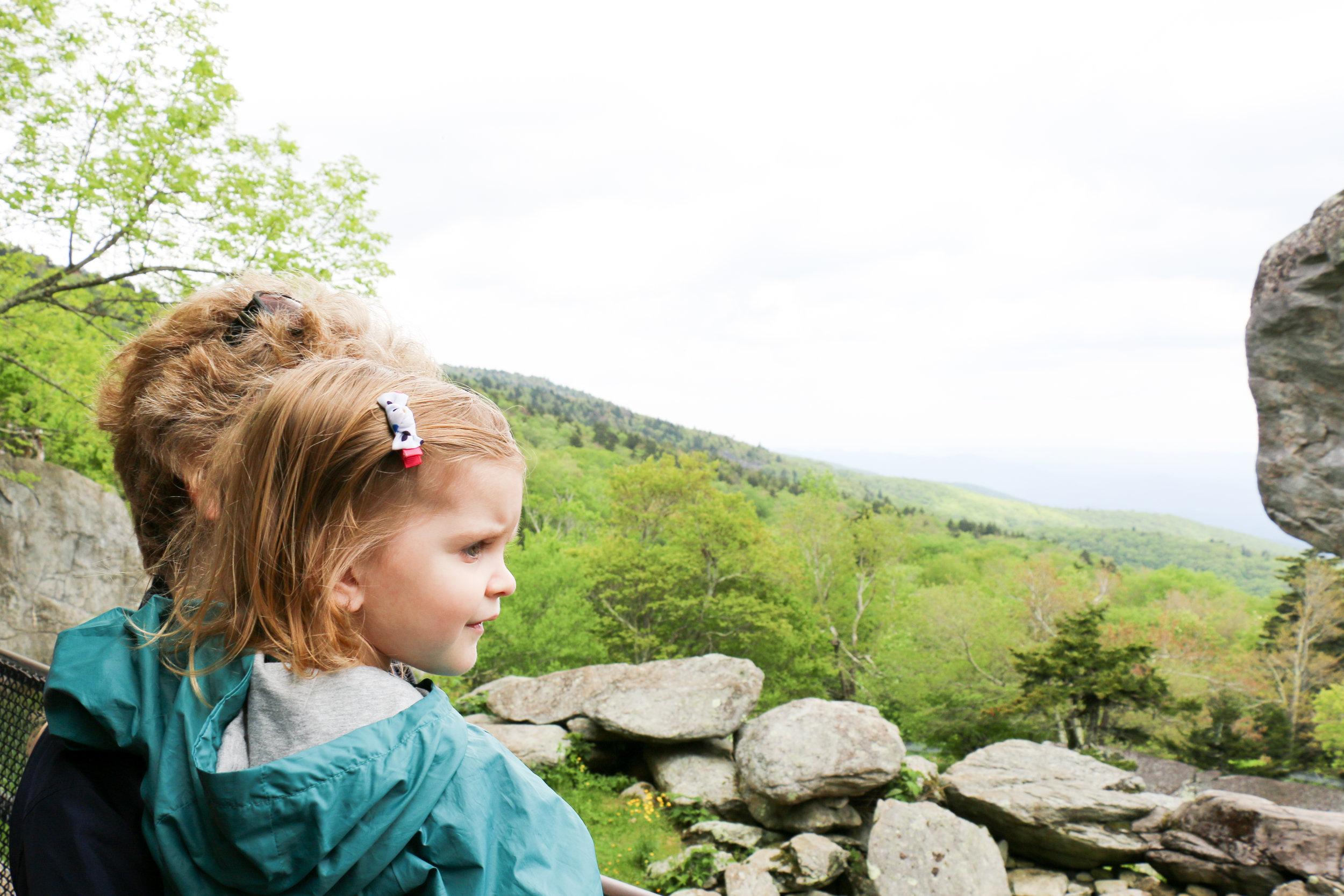 grandfather-mountain-wildlife-habitat-clm