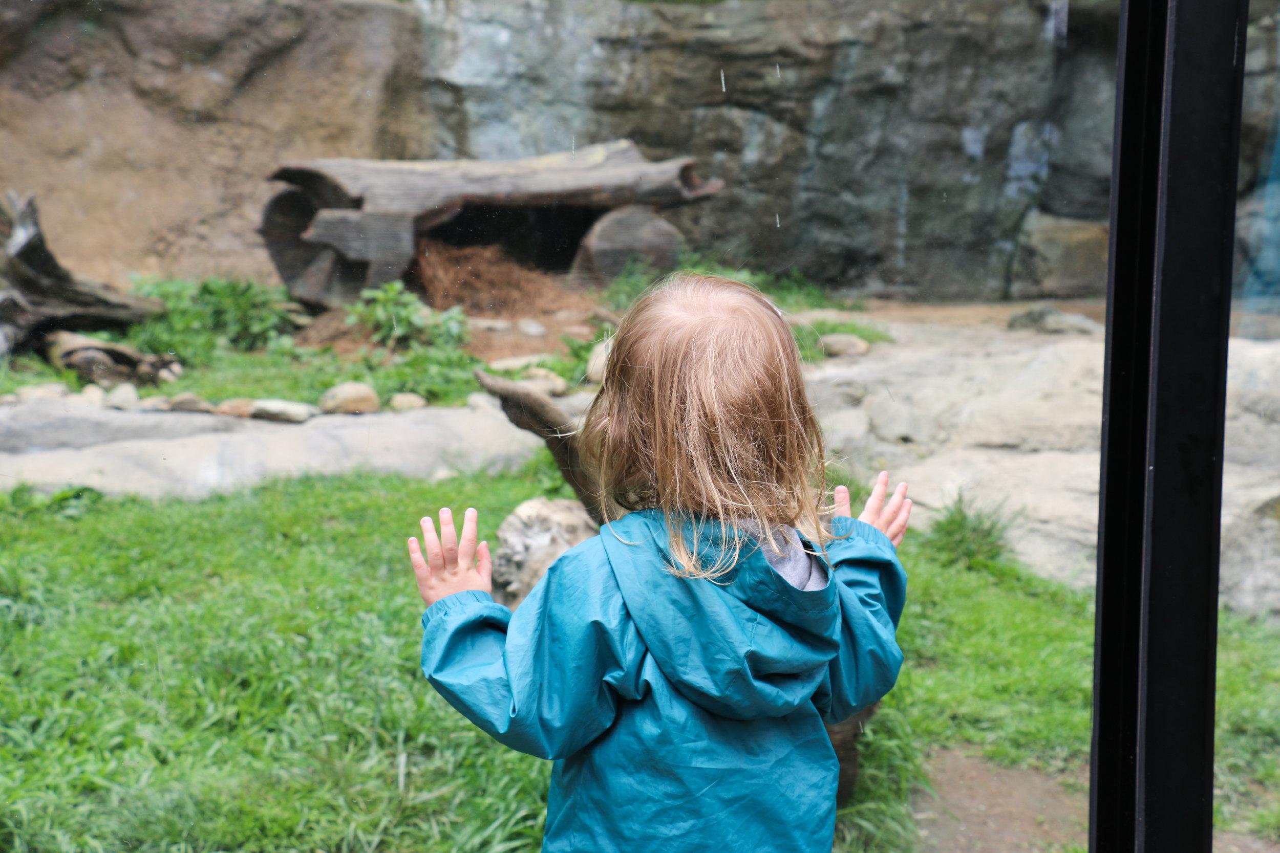 grandfather-mountain-wildlife-habitat-clm-otter