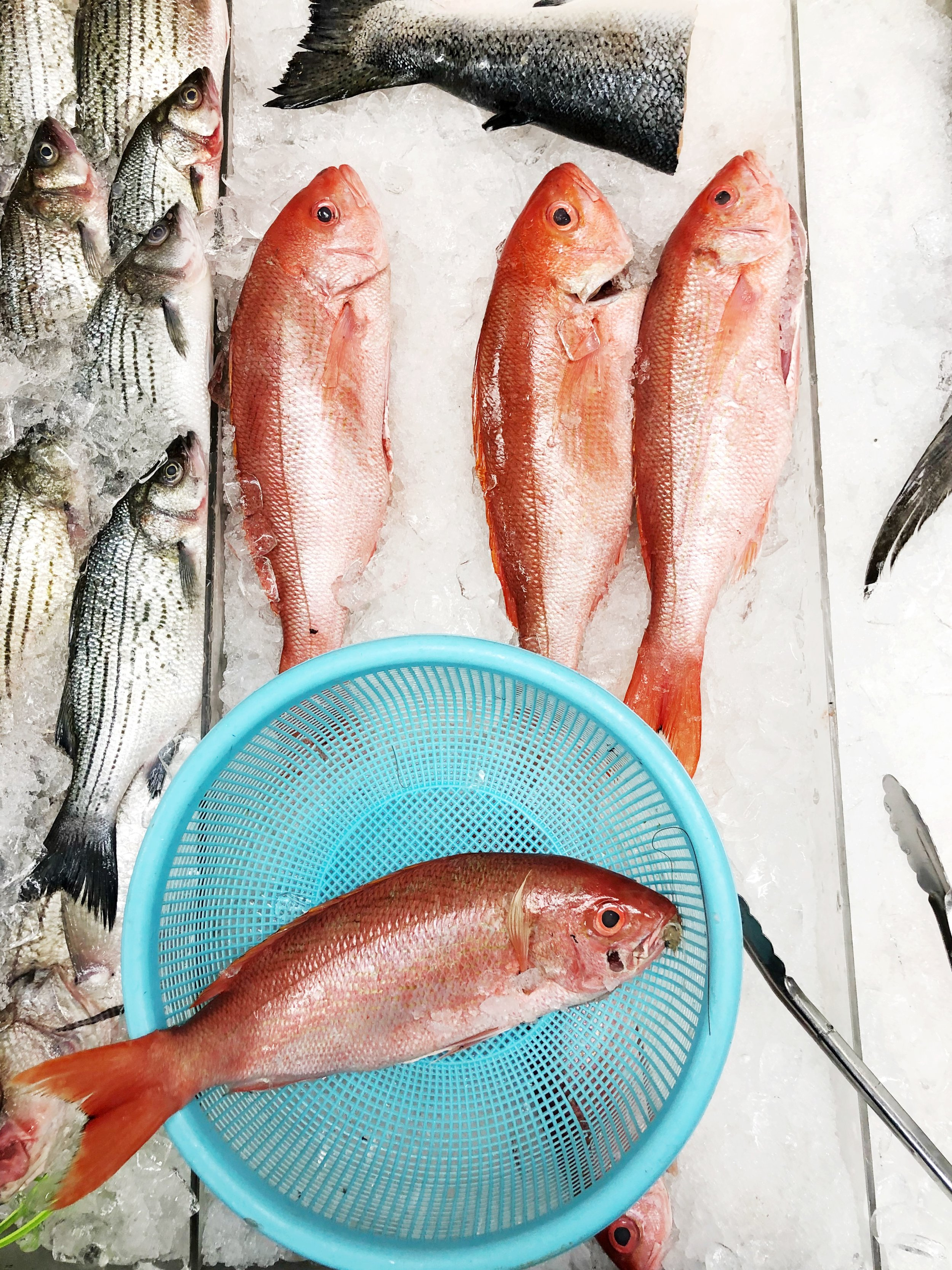 inner-harbor-seafood-plaza-midwood-charlotte-nc-red-snapper